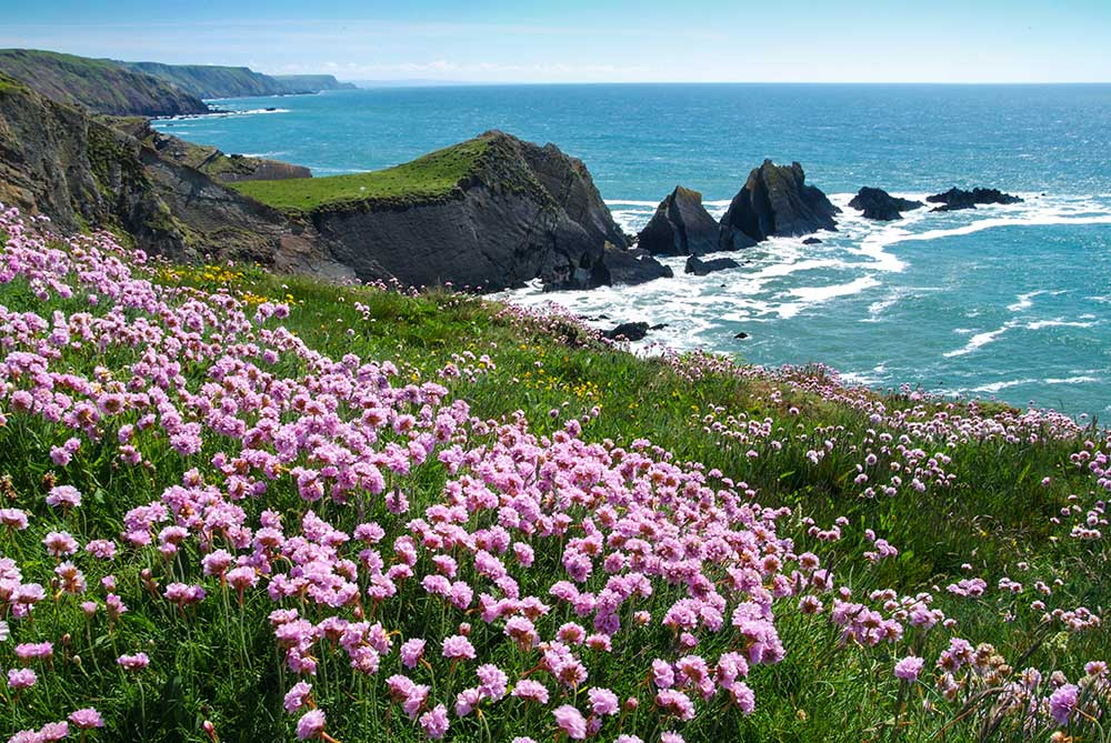 Area Of Outstanding Natural Beauty Devon