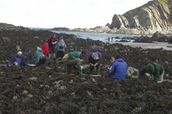 Coastwise beach survey at Lee Bay